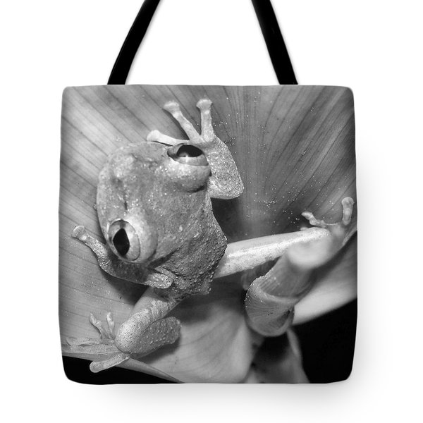 Hi From Frog In A Tai Tote Bag