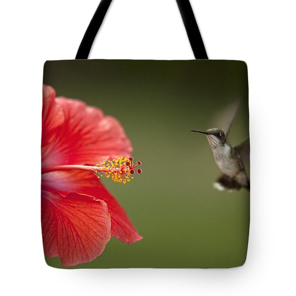 Hibiscus Hummingbird Tote Bag by John Crothers