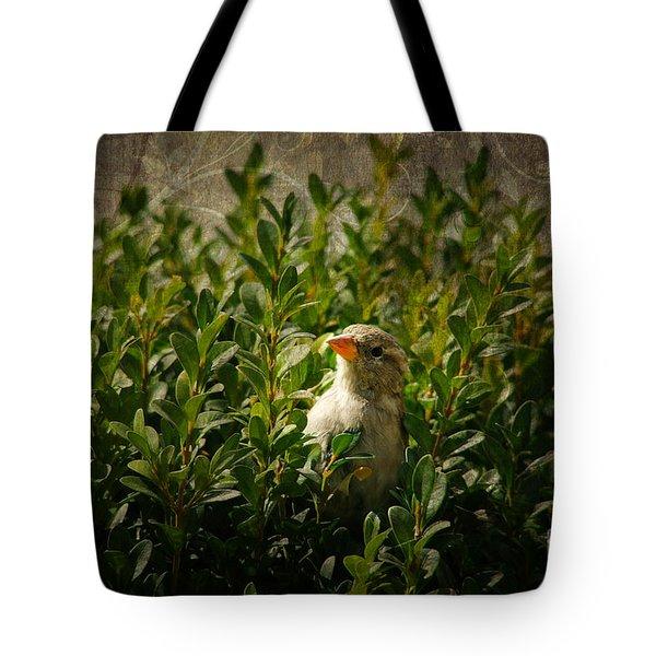 Hide And Seek Tote Bag by Mariola Bitner