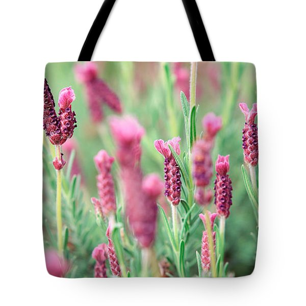 High Angle View Of Italian Lavender Tote Bag