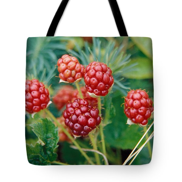 Highbush Blackberry Rubus Allegheniensis Grows Wild In Old Fields And At Roadsides Tote Bag by Anonymous