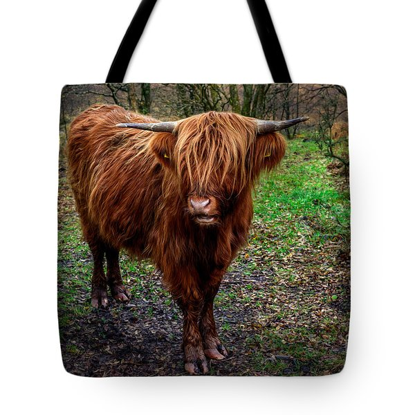 Tote Bag featuring the photograph Highland Beast  by Adrian Evans