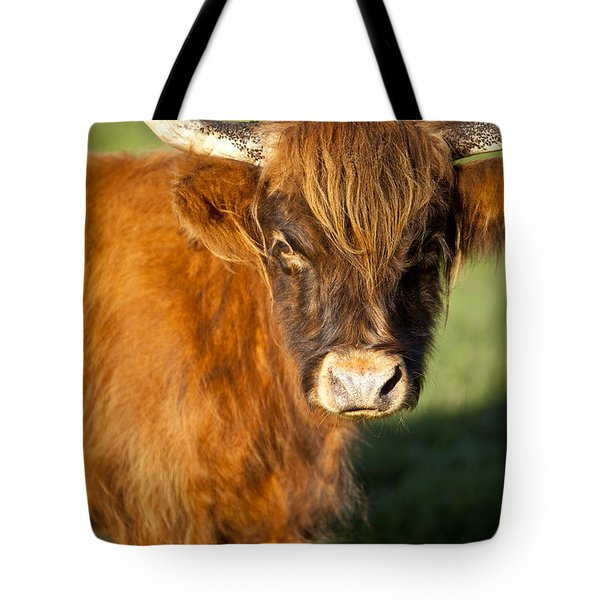Highland Cow Tote Bag by Brian Jannsen