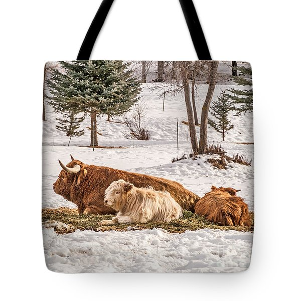 Highland Cow With Calves Tote Bag