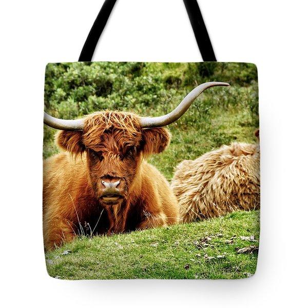 Highland Cows Tote Bag