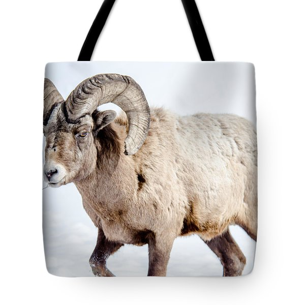 Big Horns On This Big Horn Sheep Tote Bag