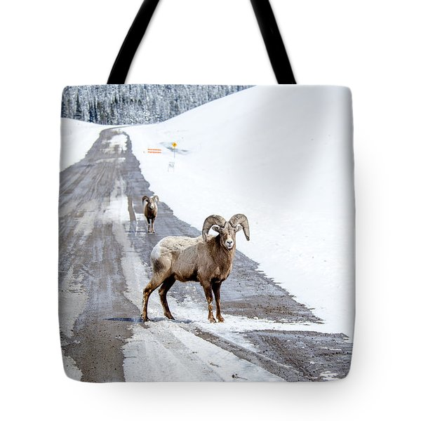On The Road Again Big Horn Sheep  Tote Bag