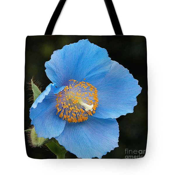 Himalayan Gift -- Meconopsis Poppy Tote Bag