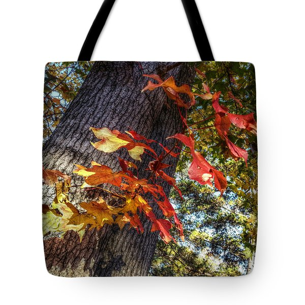 Hints Of Fall Tote Bag