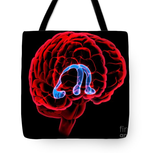 Hippocampus And Fornix Tote Bag by Evan Oto