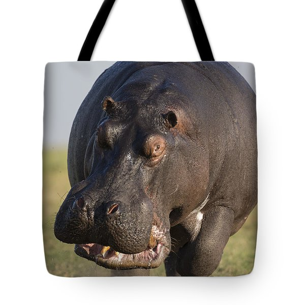 Tote Bag featuring the photograph Hippopotamus Bull Charging Botswana by Vincent Grafhorst