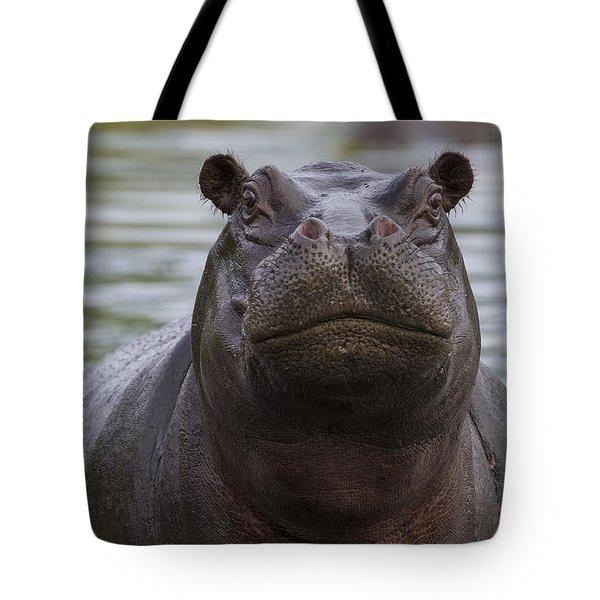 Hippopotamus Bull Khwai River Botswana Tote Bag by Vincent Grafhorst