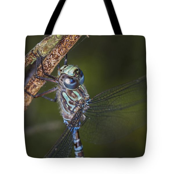 Tote Bag featuring the photograph Holding On by Windy Corduroy