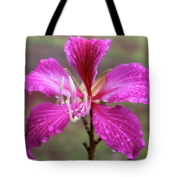 Hong Kong Orchid Tree Flower Tote Bag by Venetia Featherstone-Witty