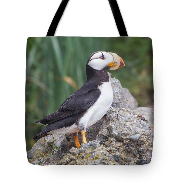 Horned Puffin Tote Bag by Chris Scroggins