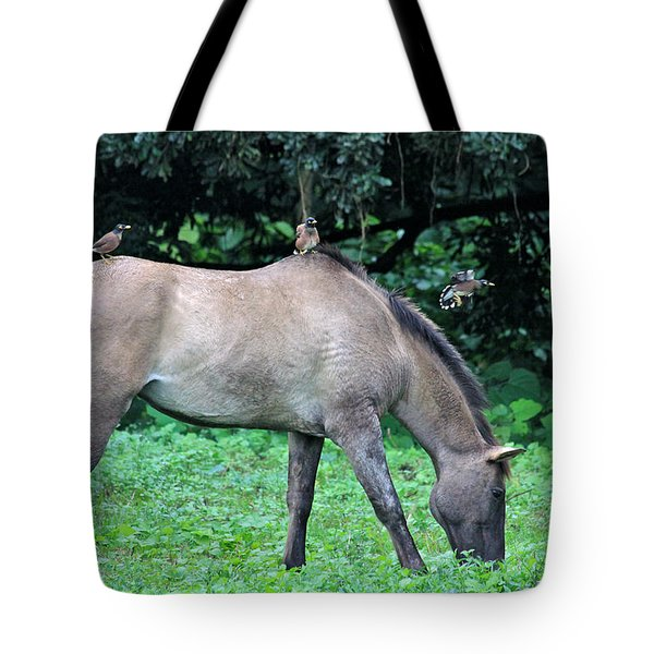 Horse And Three Myna Birds Tote Bag