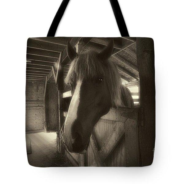 Horse In Barn Stall Tote Bag by Dan Friend