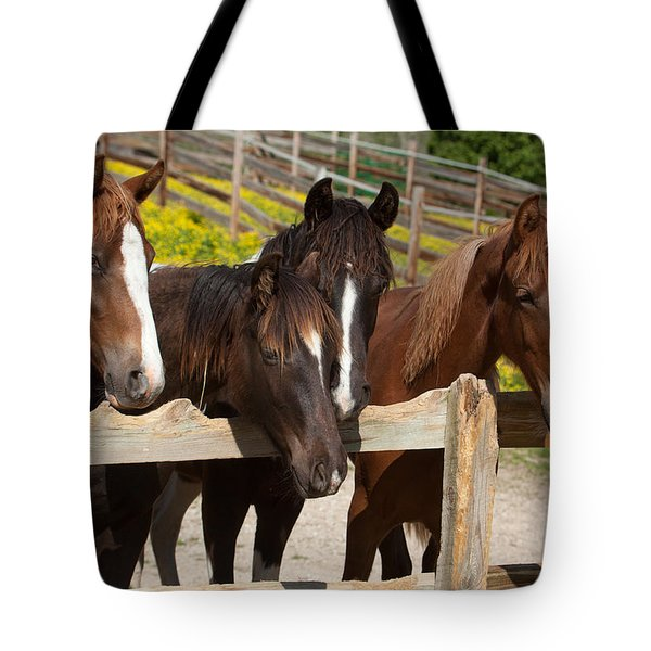 Horses Behind A Fence Tote Bag