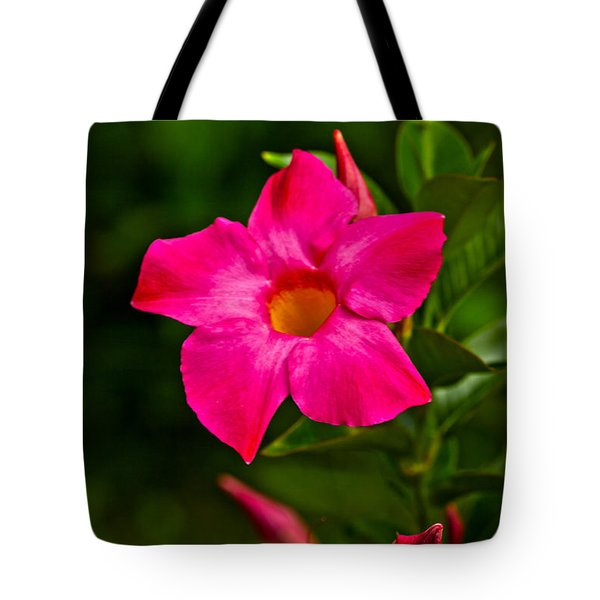 Hot Pink Dipladenia Tote Bag by Karol Livote