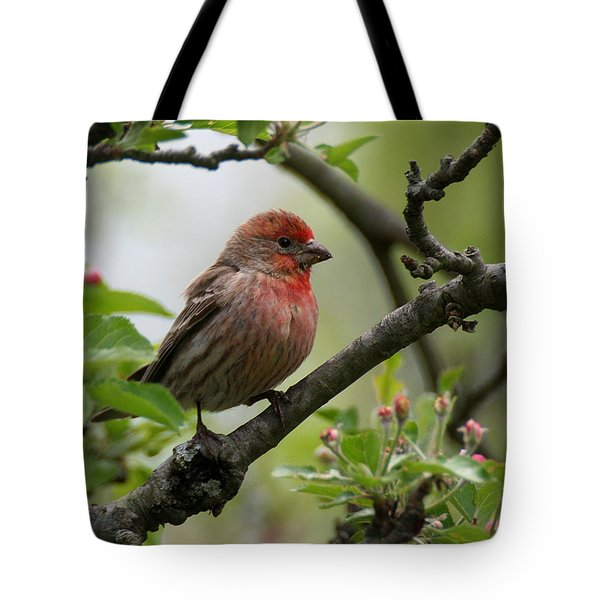 House Finch In Apple Tree Tote Bag