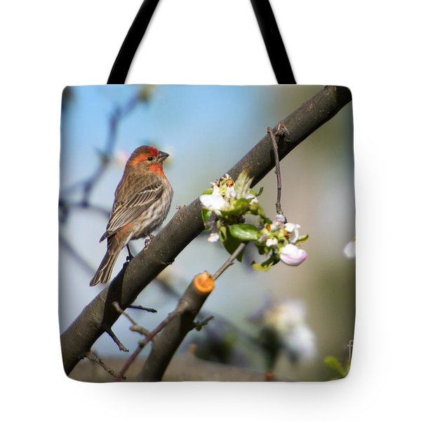 House Finch Tote Bag by Mike Dawson