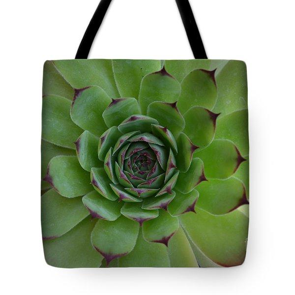 Houseleek Sempervivum Tote Bag