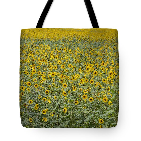 Huge Wild Sunflower Colony Tote Bag