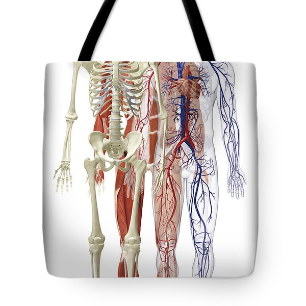 Human Body Systems, Illustration Tote Bag