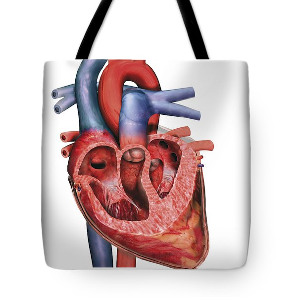 Human Heart In Cross-section Tote Bag