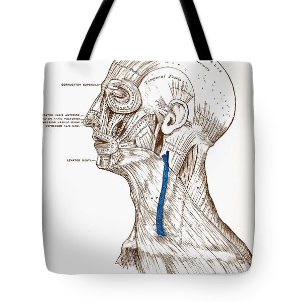 Human Muscular System Tote Bag by Granger