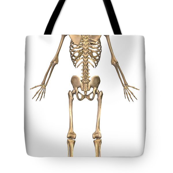Human Skeletal System, Back View Tote Bag by Stocktrek Images