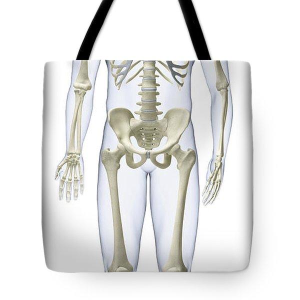 Human Skeleton, Illustration Tote Bag
