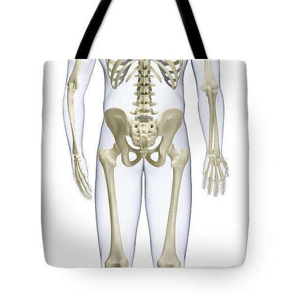 Human Skeleton, Rear View Tote Bag