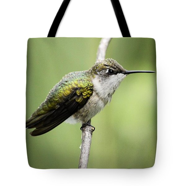 Hummingbird 3 Tote Bag by Bonfire Photography