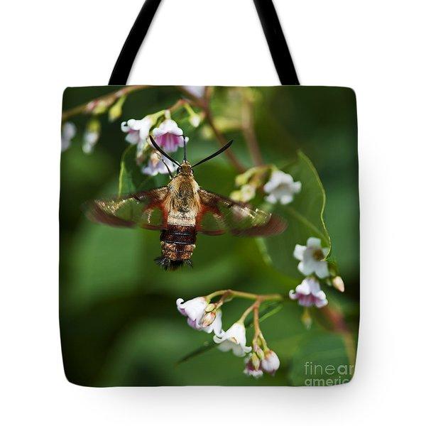 Hummingbird Clearwing... Tote Bag by Nina Stavlund