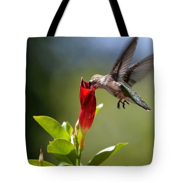 Hummingbird Dipping Tote Bag by Debbie Green