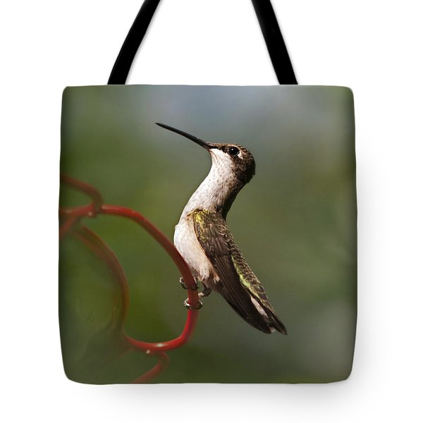 Hummingbird Eloquent Appeal Tote Bag by Christina Rollo