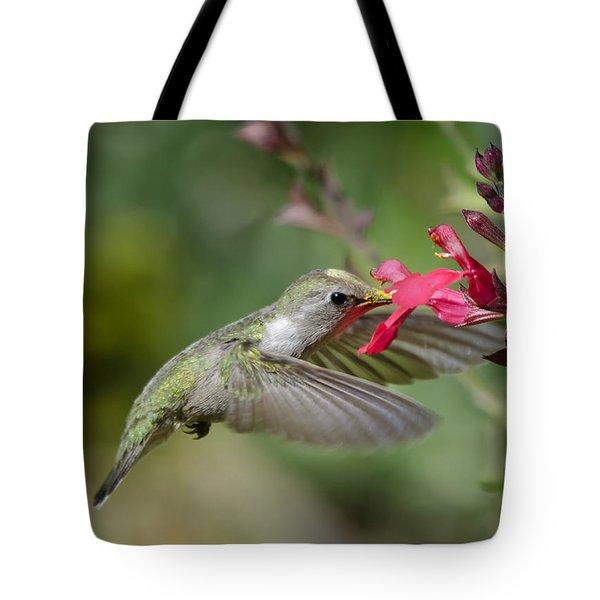 Hummingbird Heaven  Tote Bag by Saija  Lehtonen