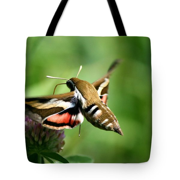 Hummingbird Moth From Behind Tote Bag by Neal Eslinger