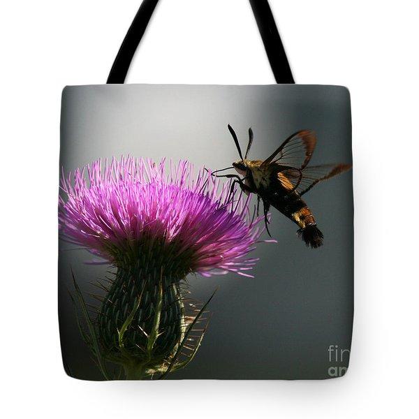Hummingbird Moth II Tote Bag by Douglas Stucky