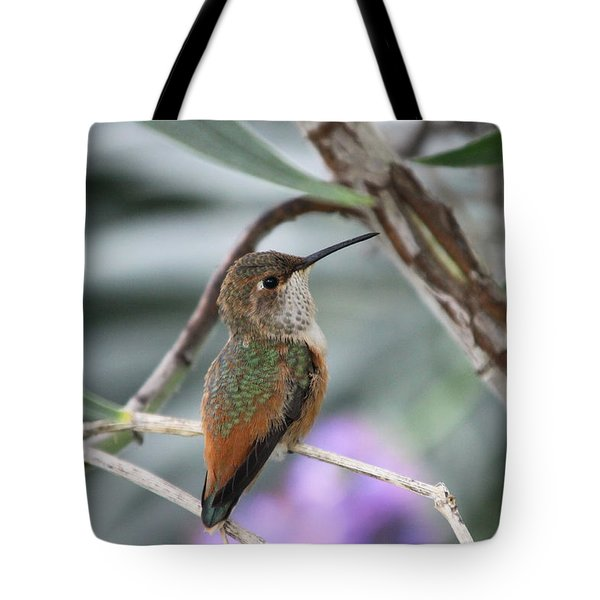 Hummingbird On A Branch Tote Bag