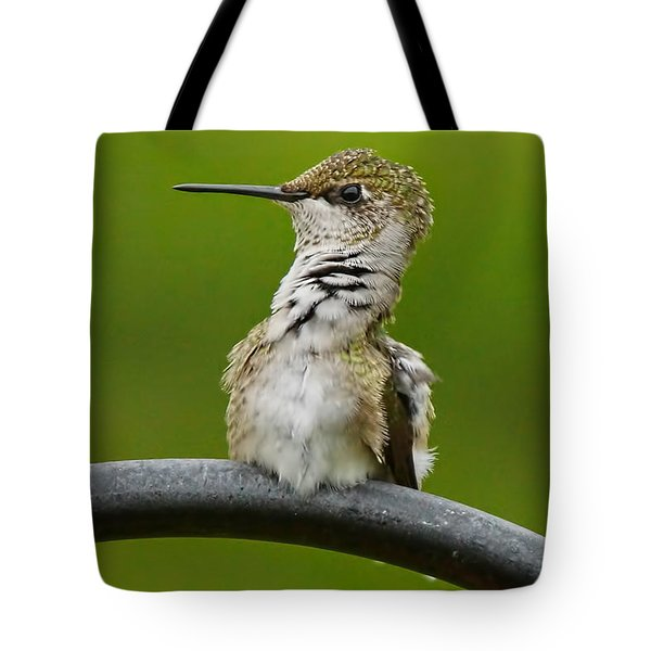 Hummingbird Stretching  Tote Bag by Alan Hutchins