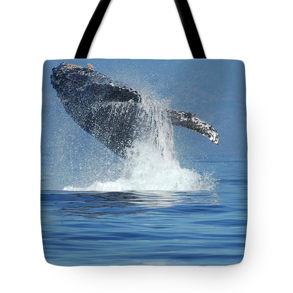 Humpback Whale Breaching Tote Bag by Bob Christopher