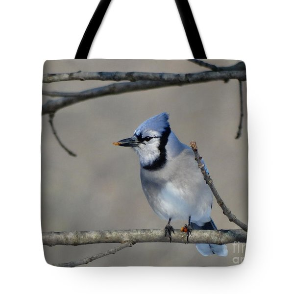 Hungry Blue Jay Tote Bag