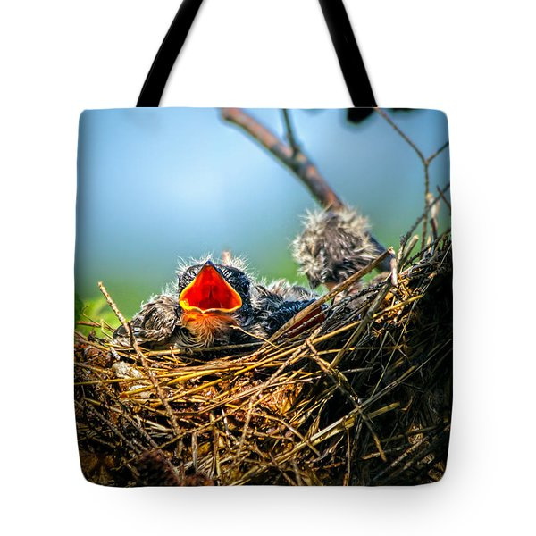 Hungry Tree Swallow Fledgling In Nest Tote Bag by Bob Orsillo