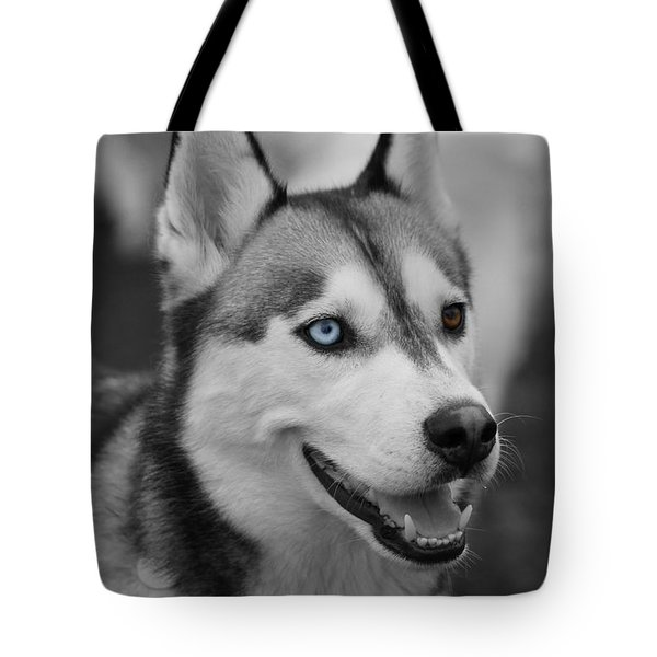Tote Bag featuring the photograph Husky Portrait by Vicki Spindler