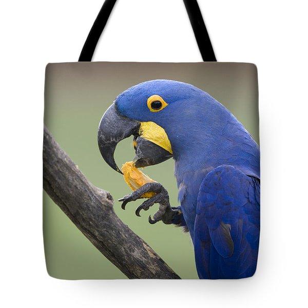 Hyacinth Macaw Feeding On Palm Nut Tote Bag