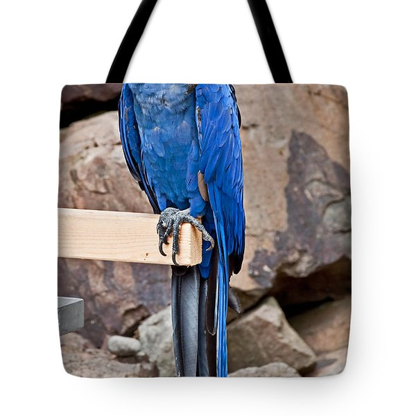 Hyacinth Macaw Parrot Bird Art Prints Tote Bag