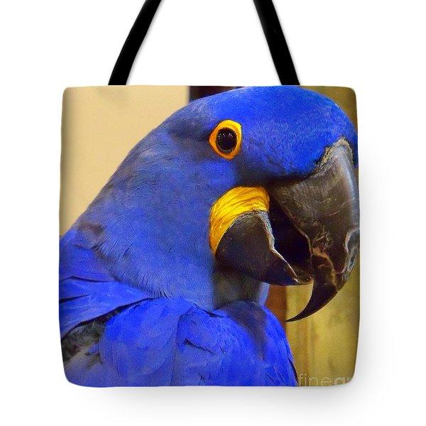 Hyacinth Macaw Portrait Tote Bag
