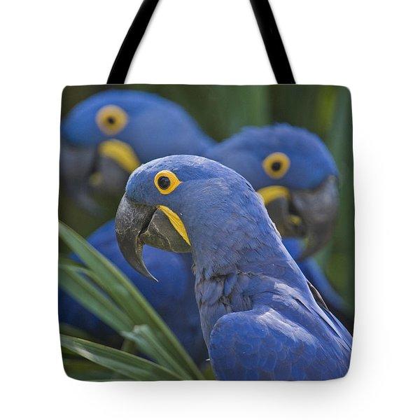 Hyacinth Macaws Anodorhynchus Tote Bag